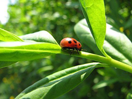 awaking: ladybug Stock Photo