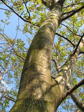 awaking: walnut-tree