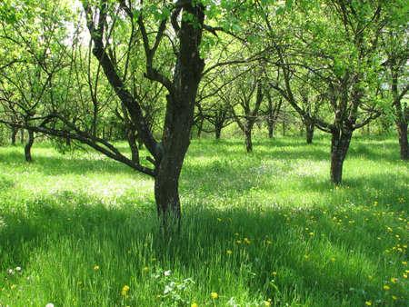 awaking: orchard