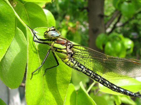 dragon-fly photo