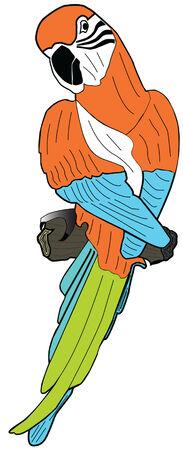 popinjay: Parrot