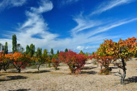 Autumn apricot orchard on sandy lakeside with fantastical clouds photo
