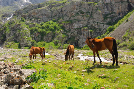 Horses are grazed near to the small mountain river photo