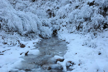 dean: Winter, the frozen stream and forest with hoar frost