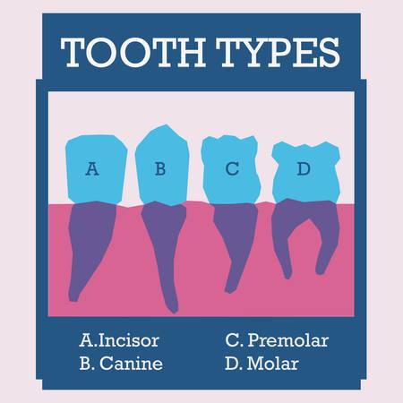 premolar: Dental design over pink background, vector illustration Illustration