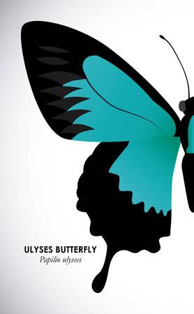 buterfly: Butterfly design over white background, illustration Illustration