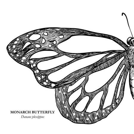 Butterfly design over white background, illustration Vector