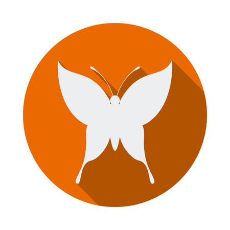 buterfly: Butterfly design over white background,  Illustration