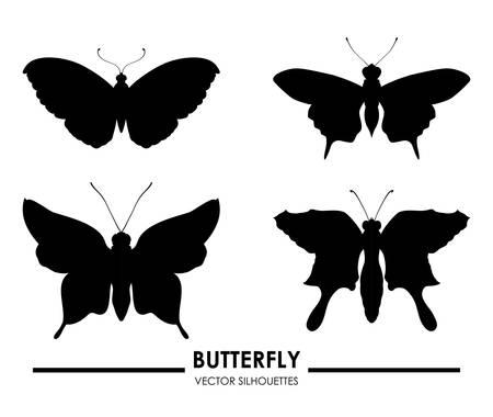 Butterfly design over white background, vector illustration Vector