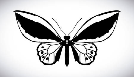buterfly: Butterfly design over white background, illustration Illustration