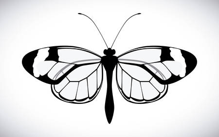 buterfly: Butterfly design over white background, vector illustration Illustration