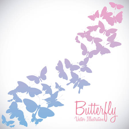 buterfly: Butterfly design over white background, vector illustration Illustration