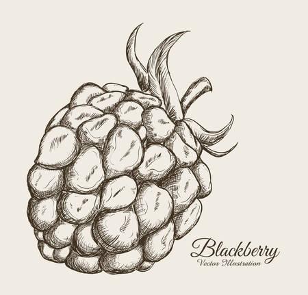fruits drawn design, vector illustration eps10 graphic