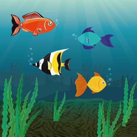 ocea: Fish design over white background, vector illustration. Illustration