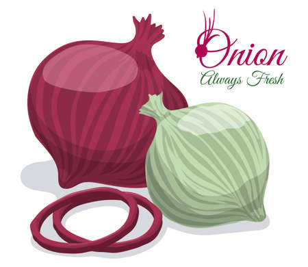 onions: Food design over white background, vector illustration. Illustration