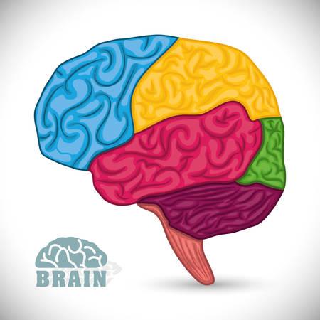 cerebro humano: Diseño Cerebro humano, ilustración vectorial eps 10. Vectores
