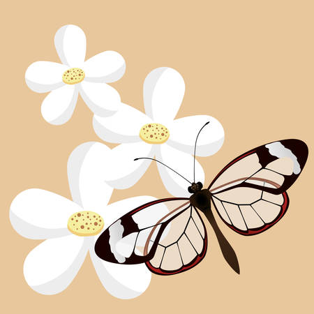 classic style: Butterfly insect and natural icons design, vector illustration