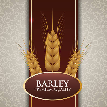 wheat harvest: Barley  concept and wheat design, vector illustration 10 eps graphic.