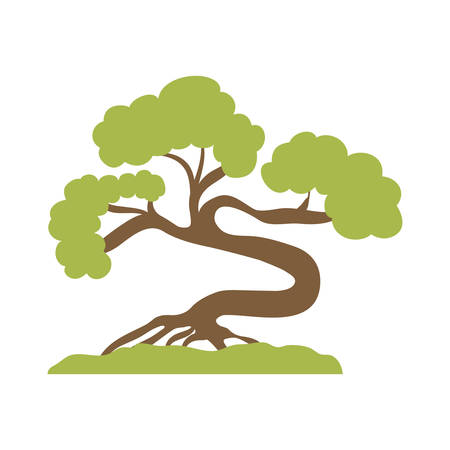 dynasty: Japan culture concept represented by bonsai plant icon over flat and isolated background Illustration