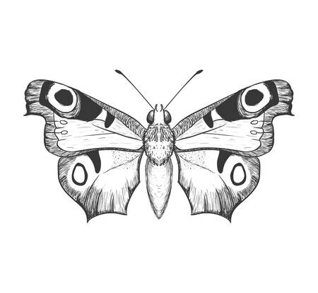 represented: Insect concept represented by Butterfly icon. Isolated and flat illustration