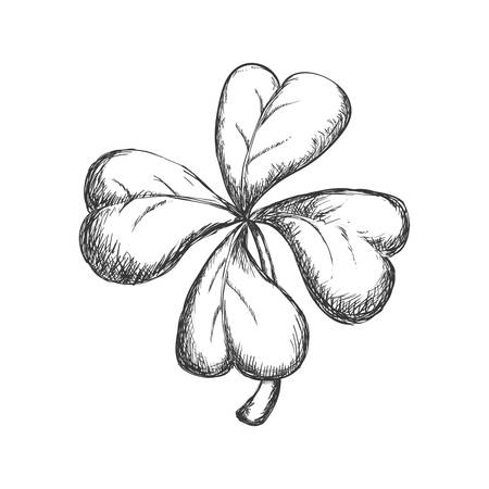 decoraton: Nature garden decoraton concept represented by clover sketch icon. Isolated and flat illustration