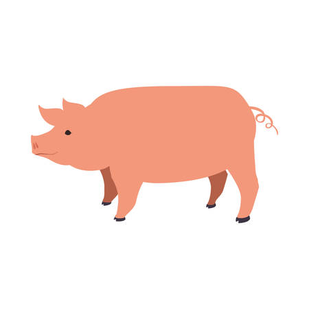 reserve: Pig animal farm pet character icon. Isolated and flat illustration. Vector graphic Illustration