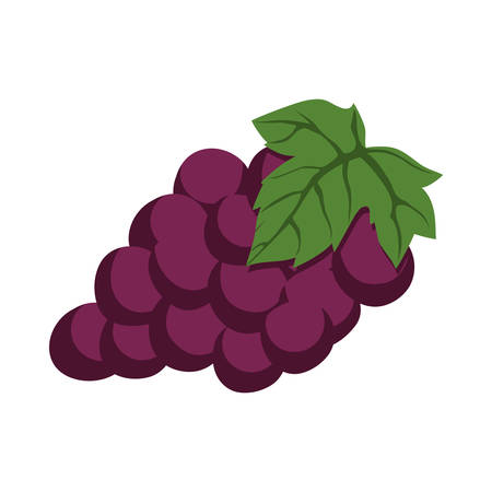 food market: grapes healthy food organic food market icon. Isolated and flat illustration. Vector graphic