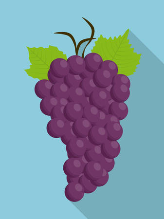 purple grapes: grapes purple fruit organic food icon.  Flat and Colorfull illustration. Vector graphic
