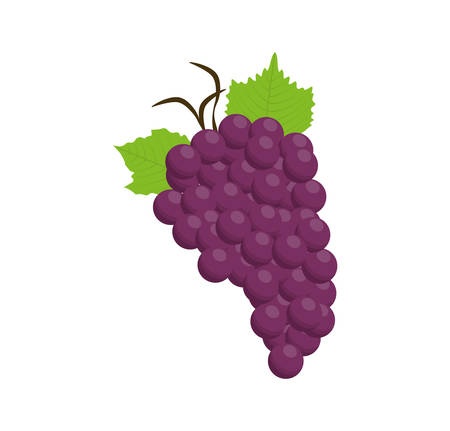 grapes purple food fruit con. Isolated and flat illustration Illustration