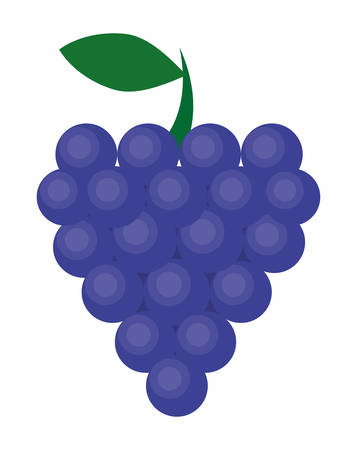 grape crop: grapes fruit healthy organic food icon. Colorful and flat design. Vector illustration Illustration