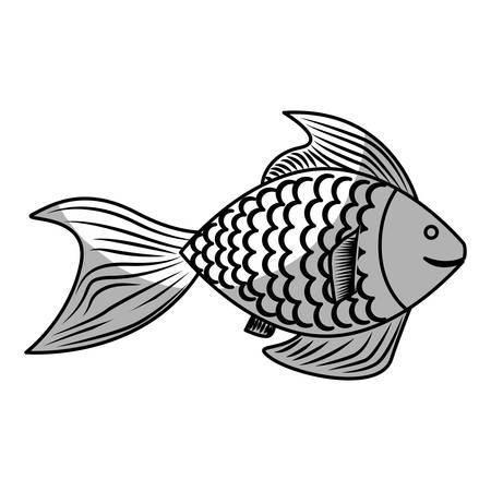 sea fish icon over white background. vector illustration