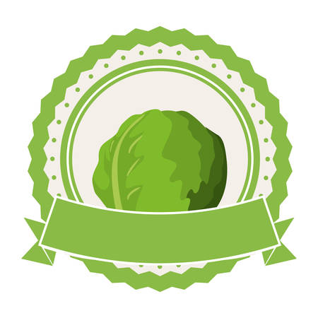 cabbage or lettuce vegetable icon image vector illustration design