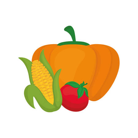 pumpkin tomato: Fresh pumpkin, corn and tomato vegetables icon vector illustration graphic design Illustration