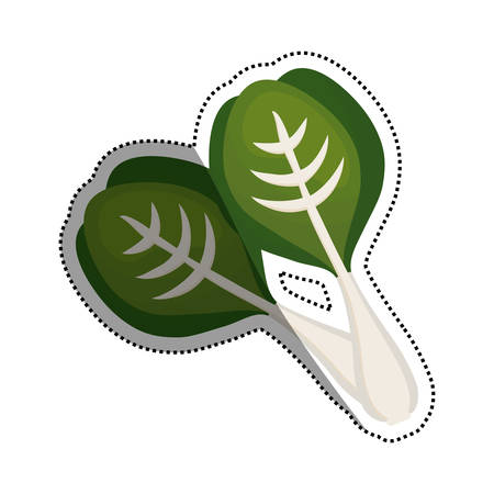 Spinach healthy food icon vector illustration graphic design