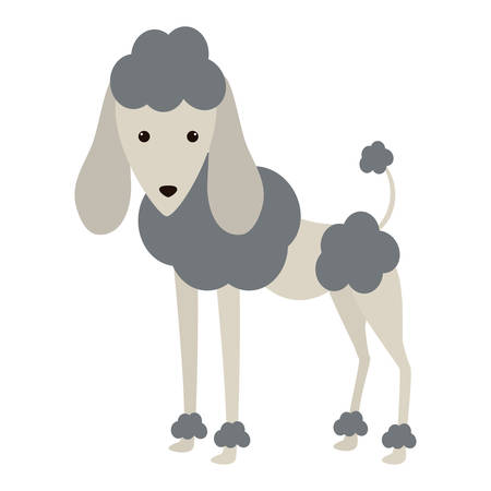 trusting: cartoon cute poodle dog icon over white background. coloful design. vector illustration Illustration