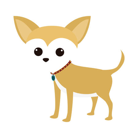 cartoon cute chihuahua dog icon over white background. coloful design. vector illustration