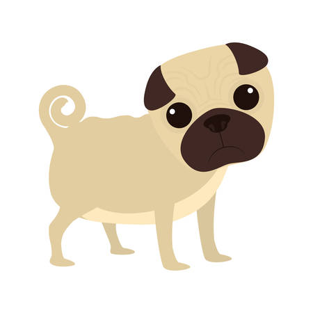 pug dog: cartoon cute pug dog icon over white background. coloful design. vector illustration