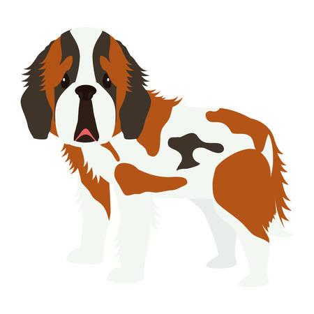 cartoon cute st bernard dog icon over white background. coloful design. vector illustration