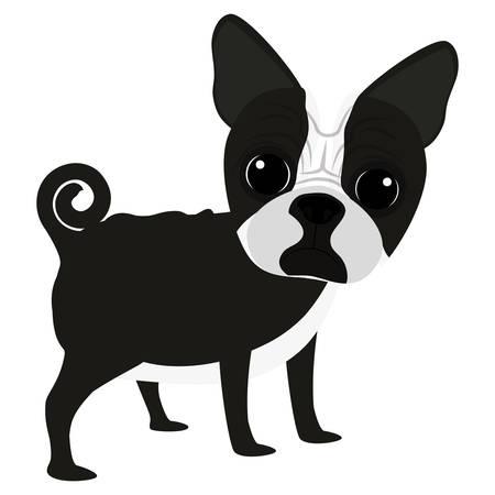 cartoon cute boston terrier dog icon over white background. coloful design. vector illustration