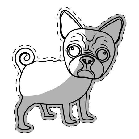 boston terrier dog breed icon image sticker vector illustration design