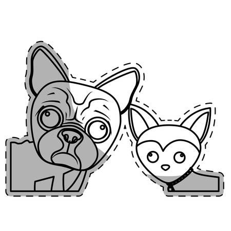boston terrier and chihuahua two dog breeds icon image vector illustration design