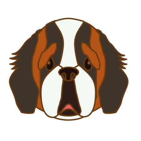 saint bernard: saint bernard dog face icon over white background. colorful design. vector illustration