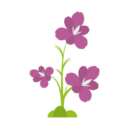 amaryllis flower decoration beautiful vector illustration eps 10