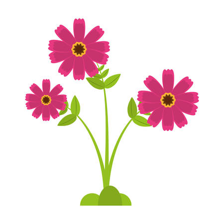 pink cosmos flower spring icon vector illustration eps 10