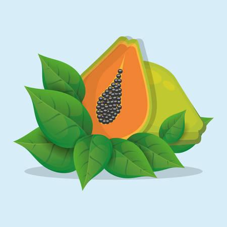papaya with leaves natural vector illustraton eps 10