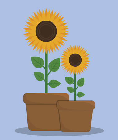sunflowers in a pot. colorful design. vector illustration