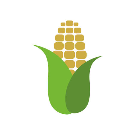 Corn farm fresh vector illustration graphic design Illustration