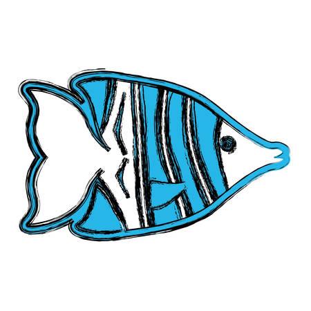 blue fish: Fish sea animal symbol icon vector illustration graphic design Illustration
