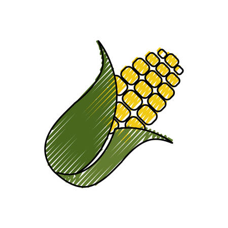 corn food grain vector icon illustration graphic design Illustration