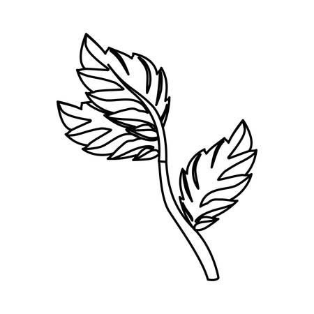 a sprig: Mint plant leaves icon vector illustration graphic design Illustration